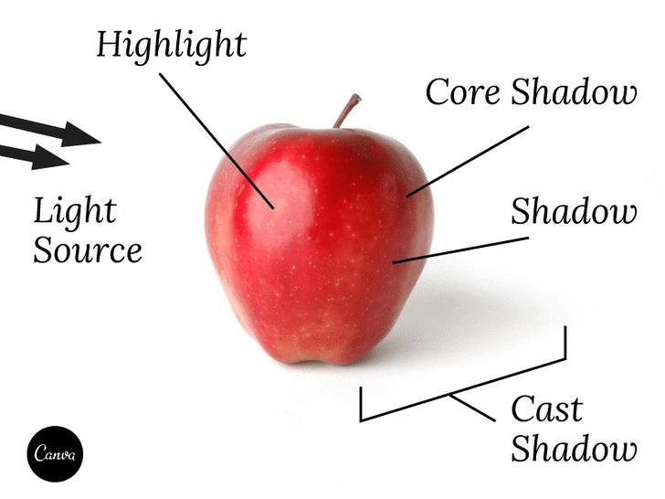 水果解剖设计手绘图